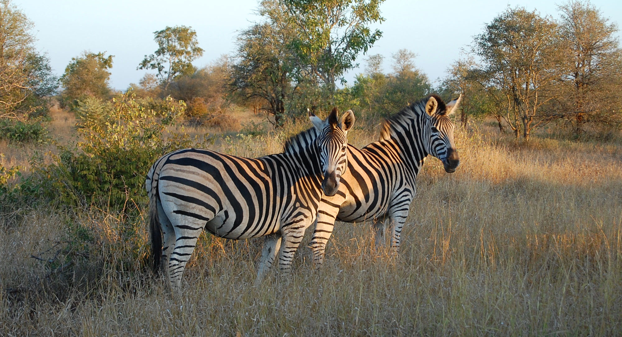 Touch Africa Safaris